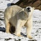 De 10 gevaarlijkste dieren ter wereld