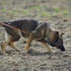 Taken van de hond: spoorzoeken