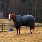 Paarden houden: Diverse soorten dekens