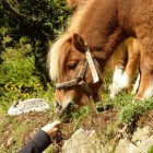 Hoe leert een paard?