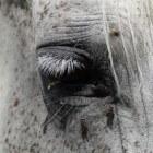 Vachtkleuren bij paarden