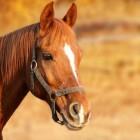 Het kopen van een paard