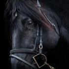 Paardrijden voor beginners