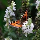 De vlinder: een elegant insect