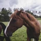 Paardenvoer: soorten ruwvoer