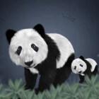 De Reuzenpanda: een bijzonder dier