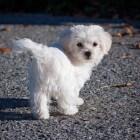 Wanneer moet mijn hond naar de trimsalon?