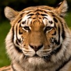 De 10 mooiste dieren ter wereld