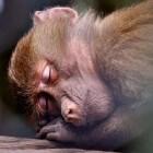 Hoelang slapen dieren?