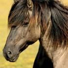Sieraden van paardenhaar