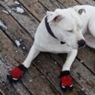 Functionele kleding voor honden