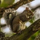 De eekhoorn - een grappig diertje met verzamelwoede