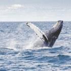 Spectaculaire dieren in onze Noordzee