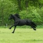 Het borstelen van een paard/pony