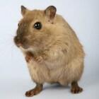 Activiteiten voor de hamster