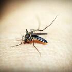 Daar zijn die vervelende muggen weer!