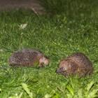 Egels in je tuin lokken