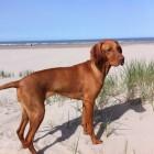 De grootste evenementen voor honden in Nederland