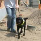 Misverstanden rond blindengeleidehonden