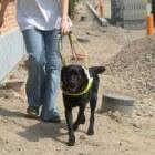 Nazorg baas met blindengeleidehond door instructeur