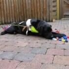 Dopjesactie voor Belgisch Centrum voor Geleidehonden (BCG)