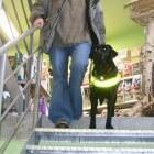 Opleiding van blindengeleidehond met baas
