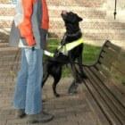 Een blindengeleidehond op school