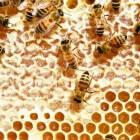 Bijenwas als bouwmateriaal en voor diverse producten