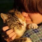 Misverstanden rond kattengedrag