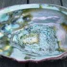 Abalone – de schelp met parelmoer en paua