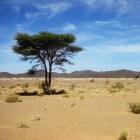 Groene muur moet verwoestijning in Afrika tegengaan