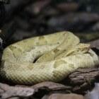 Snake island: Een eiland vol giftige slangen
