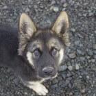 Vrijwilligerswerk: Hondenopvang