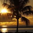 Palmen en hun vruchten