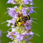 Tips tegen wespen en muggen