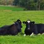 Verschillende staltypen voor de koe