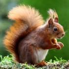 Praktische tips voor het voeren van eekhoorns in de tuin