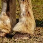 Paarden: Natuurlijk bekappen doe je zo!
