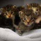Katten ziektes en aandoeningen