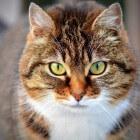 Een kat als huisdier als je allergisch bent