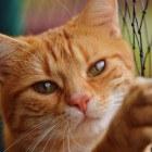 Herken de slechte fokker bij katten