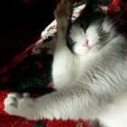 Waarom katten hun vacht verzorgen