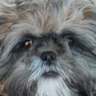 Huisdieren: De loopse hond