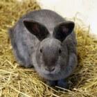 Zelf een konijnenhok bouwen, hoe ga je te werk?