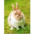 Een konijn uit het asiel: ook heel lief en gezellig