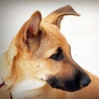 Een pup opvoeden door training