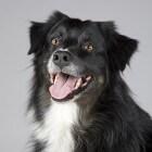 Wat te doen als je hond een slechte adem heeft
