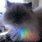 Fascinerende kattenogen