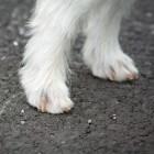 Gezondheid hond: voeten
