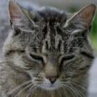 Positieflijst of huisdierlijst, dierwelzijn ondergeschikt